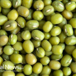 The Mighty Mung Bean