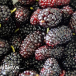 Mulberries: Good Choice for Diabetics?