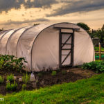 10 Tips for Greenhouse Growing Beginners