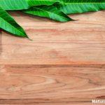 How Mango Leaves Can Treat Diabetes?