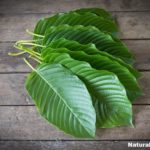 Overcoming Premature Ejaculation with Kratom